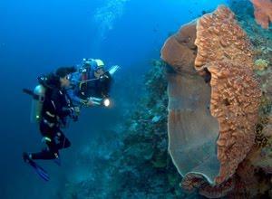 Perairan-Nasional-Wakatobi
