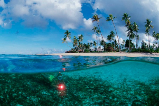 Wakatobi Diving